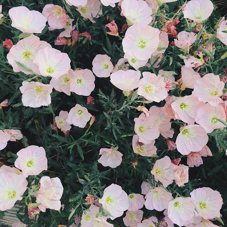 Processed with VSCOcam with g1 preset